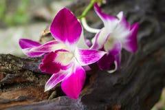 Purpere orchidee op hout met onduidelijk beeldachtergrond Royalty-vrije Stock Foto's