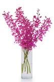 Purpere orchidee in vaas royalty-vrije stock afbeelding