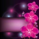 Purpere orchideeachtergrond Stock Fotografie