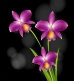 Purpere orchideebloemen met zwarte achtergrond Royalty-vrije Stock Fotografie