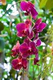 Purpere Orchideebloemen op Bladerenachtergrond Royalty-vrije Stock Afbeelding