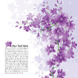 Purpere Orchideeën Stock Foto