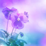 Purpere pansiesbloemen Royalty-vrije Stock Afbeelding