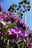 Purpere Prinses Flowers in Orlando royalty-vrije stock foto's
