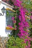 Purpere of roze bouganvilla aan kant van huis Stock Fotografie