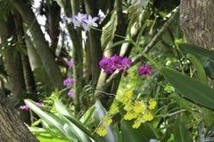 Purpere, roze en gele orchideeën royalty-vrije stock foto's