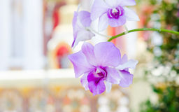 Purpere roze orchidee van Nationale de Orchideetuin van Singapore Royalty-vrije Stock Foto
