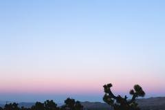 Purpere Tinten op Zonsondergang in Joshua Tree National Park Royalty-vrije Stock Fotografie