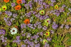Purpere trommelstokbloemen met gele en oranje madeliefjes stock fotografie
