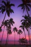 Purpere tropische zonsondergang Stock Foto's