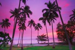 Purpere tropische zonsondergang Stock Afbeeldingen