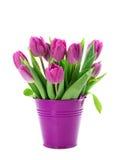 Purpere tulpen in emmer Stock Afbeeldingen