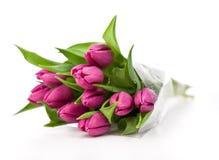 Purpere tulpen op een witte achtergrond royalty-vrije stock afbeeldingen
