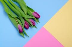 Purpere tulpen op pastelkleuren hoogste mening als achtergrond Document ambachtontwerp Blauw, roze en geel Royalty-vrije Stock Afbeelding