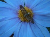 Purpere Vlinder Royalty-vrije Stock Foto