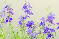 Purpere wilde bloemen Stock Foto