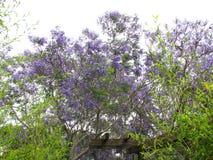 Purpere wilde bloemen Stock Fotografie
