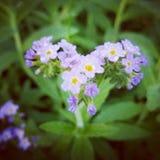 Purpere wilde bloemen Stock Afbeeldingen
