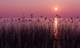 Purpere zonsondergang Royalty-vrije Stock Afbeelding