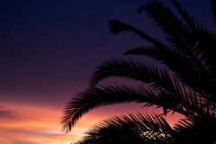 Purpere Zonsondergang in Paradijs Royalty-vrije Stock Afbeelding