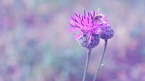 Purple abstract background with flowers Stock Photo