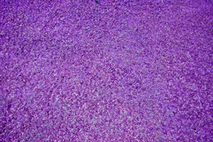 Purple abstract trimmed grass field background summer nature green lawn Stock Photography