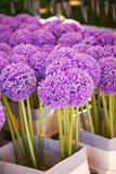 Purple Allium Royalty Free Stock Photos