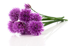 Purple allium onion flower Royalty Free Stock Images