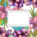 Purple amaryllis flower. Watercolor illustration set. Drawing aquarelle frame or border ornament square. Purple amaryllis flower. Watercolor illustration set royalty free illustration