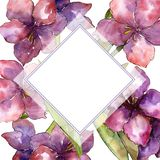 Purple amaryllis flower. Watercolor illustration set. Drawing aquarelle frame or border ornament square. Purple amaryllis flower. Watercolor illustration set vector illustration