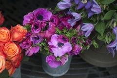 Purple anemone Stock Photo