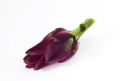 Purple artichoke flower bud on white, isolated Royalty Free Stock Photo