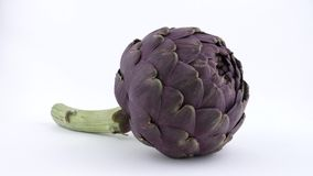 Purple artichoke rotating on a turn table. Isolated on white background. Side view. stock video footage