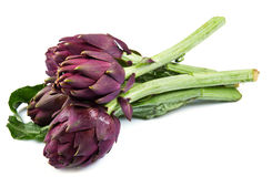 Purple artichokes. Isolated on white background. Some purple artichokes. Isolated on white background Royalty Free Stock Image