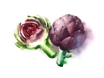 Purple Artichokes Watercolor Food Vegetables Illustration Hand Painted  on white background Stock Photos