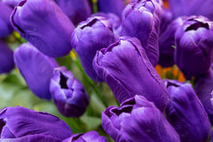 Purple artificial tulip Royalty Free Stock Photos
