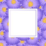 Purple Aster, Daisy Flower Banner Card. Vector Illustration.  royalty free illustration