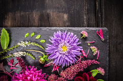 Purple aster flower in autumn scenery on dark table Royalty Free Stock Photos