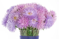 Purple aster flowers in vase Stock Photography