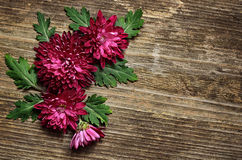 Purple asters arrangement on wooden background Stock Photography