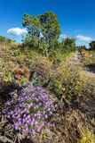 Purple Asters in Northern New Mexico Stock Photo