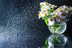 Purple asters in a round glass vase with a spray of water. Royalty Free Stock Image
