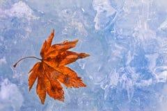 Purple autumn foliage on ice Stock Photos