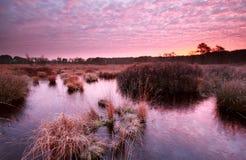 Purple autumn sunrise over swamp Royalty Free Stock Photo