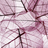 Purple background from dried fall leaves Royalty Free Stock Image