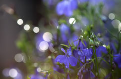 Purple background with flowers Stock Images