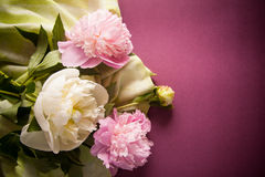 Purple background with peony flowers Royalty Free Stock Photos