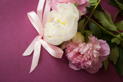 Purple background with peony flowers Royalty Free Stock Photo