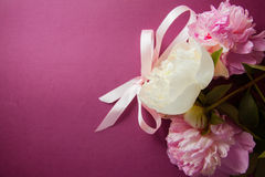 Purple background with peony flowers Royalty Free Stock Image
