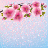 Purple background with sakura blossom - Japanese c Royalty Free Stock Photos